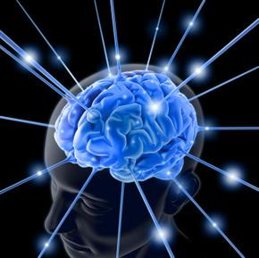 brain-763982-1_phixr